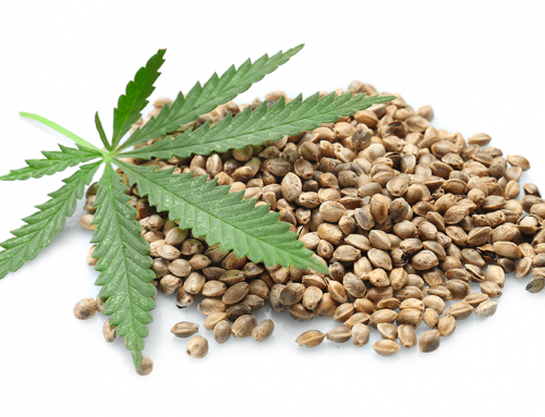 The Shocking Difference Between Hemp and Marijuana