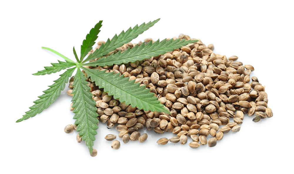 Florin Wellness Center blog - Marijuana leaf and hemp seeds. The difference between hemp and marijuana is vast.
